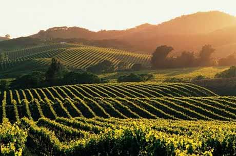 Wine_Country_Hillside11