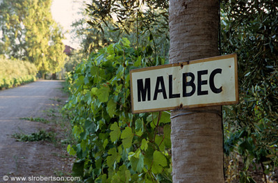 Malbec_vines_4